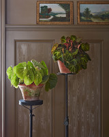 begonia in house