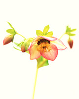 pink-yellow-flower-goodthingsml203cvr2x-0115.jpg
