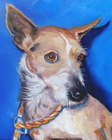 pets_case_2021_toy_fox_terrier_m_5yrs_oc_10x8.jpg