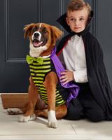 mspets-dog-halloween-vampire-d112236-mrkt-0915.jpg