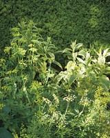 sakonnet-garden-rhode-island-0206-d112230-0216.jpg
