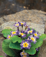 purple-flower-on-stone-goodthings-ml904aa10-0115.jpg