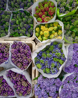 behind-the-scenes-flower-arrangement-7740-d111053.jpg