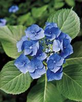 heckler-hydrangea-garden-522436aj-dsc8110-s111010.jpg