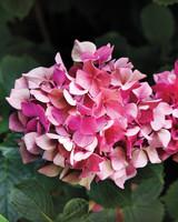 heckler-hydrangea-garden-522460aj-dsc8134-s111010.jpg