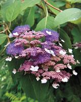 heckler-hydrangea-garden-522470aj-dsc8144-s111010.jpg