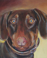 pets_rusty_kent_animal_shelter_dog_portrait_8x10_ac.jpg