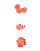 ombre-merluza-dahlia-mayflower-cupcake-357-shines-d112850.jpg