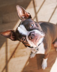 A New Study Finds That Dogs May Mimic the Personalities of Their Owners
