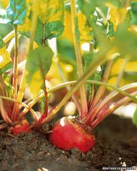 Vegetable Garden 101