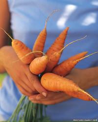 Root Vegetable Growing Guide