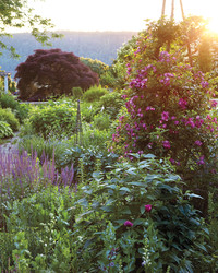 Garden Palette: Blue, Fuchsia, Lavender, & Silver