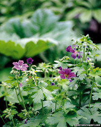 Easy Flowering Perennials