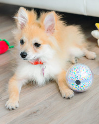 This Smart Toy Ball Allows You to Play With Your Pet Anytime, Anywhere