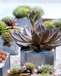 Container Garden Ideas for Any Household