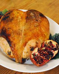 6046_111610_turkey.jpg