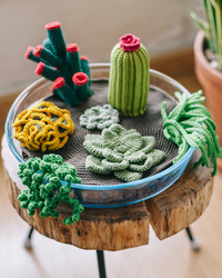 Crochet Your Own Terrarium (Including 7 Different Succulents)