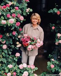 The Secrets of Martha's Rose Garden