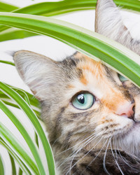 10 Pet-Friendly Houseplants for Your Home