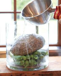 cucumbers-mld108045.jpg