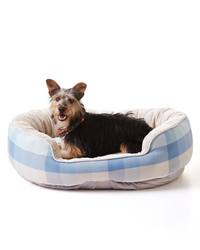 How to Stop Your Dog from Tearing Up Its Bed