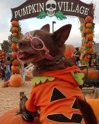 This Puppy is Going Viral for Starring in Her Own Pumpkin-Picking Photoshoot
