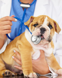 5 Big Questions About Pet Insurance, Answered
