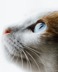 Experts Say These Are the Smartest Cat Breeds