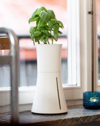 Grow Herbs With Ease in This Automated Hydroponic Pot