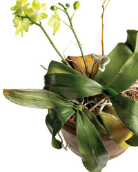 Houseplant Solutions