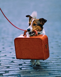 Pet Travel: How to Travel Safely with Pets