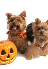 Who Knew? Pumpkin is Good For Dogs