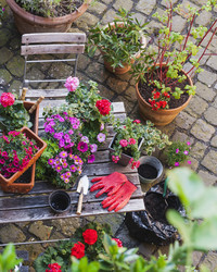 Five Ways Gardening Can Improve Your Health