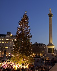 Norway is Gifting a Majestic Christmas Tree to London
