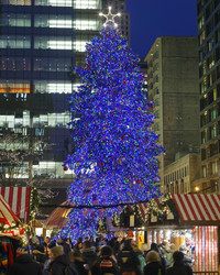It's Official: Chicago Has Chosen Their Annual Christmas Tree