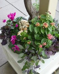 7 Pro Tips for Starting a Container Garden