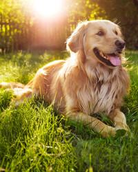How to Combat Animal Allergies