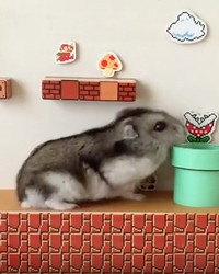 "Aww! Watch This Hamster Climb a DIY ""Super Mario Bros."" Maze"