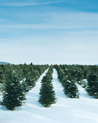 Christmas Traditions: A Day at the Tree Farm