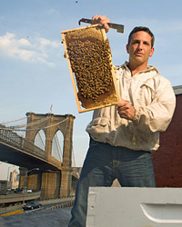 Urban Beekeeping with Andrew Cote