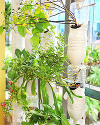 Grow it Yourself: Hydroponic Gardening in Your Home