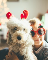 What You Need to Know to Keep Pets Safe This Holiday