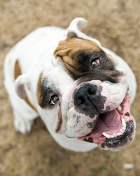 The 5 Unspoken Rules of Dog Park Etiquette