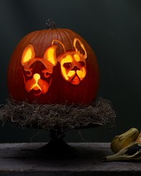 This Halloween, Why Not Carve Your Pet's Portrait Into a Pumpkin?