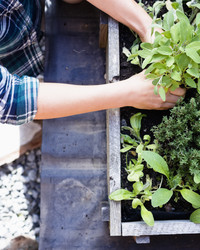 10 Reasons to Grow Your Own Healing Herb Garden