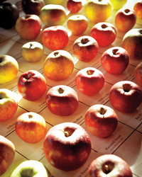 Apples: Fruit of Knowledge