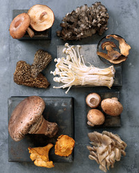 Mushroom Glossary: Get to Know All the Delicious Varieties