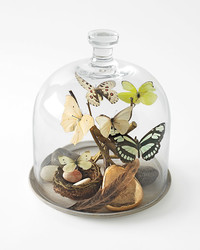 Bell Jar Keepsake