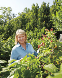 Martha's Marvelous Berry Garden