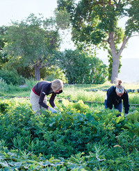 Beyond Organic: Just What Is Sustainable Food?